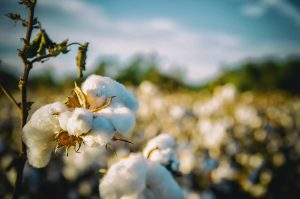 Through its farm-to-fashion cotton traceability project with vertically integrated denim and apparel manufacturer Artistic Milliners, blockchain start-up Retraced is able to trace every single kilogram of cotton from farm to final garment.